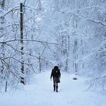 Plenitude Of A Winter Stroll