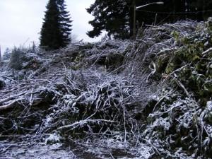 Ice Storm Dump Pile